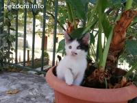 Две котета си търсят дом