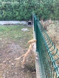 Куче Мая търси дом спешно!