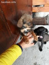 Подарявам спасени кученца от улицата