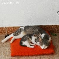 Мама Мила и бебчо Чочко