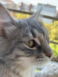 Изгубена женска котка