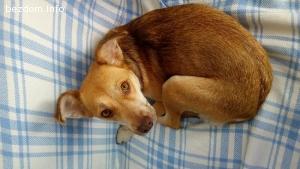 Търсим грижовен стопанин за женско кученце