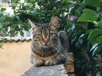 Изгубена женска котка - Варна