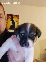 Подарявам кученца