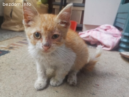 Малко котенце си търси дом във ВАРНА