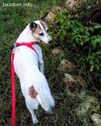 куче Бианка търси любящ дом