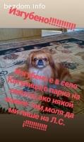 Изгубено куче!!!