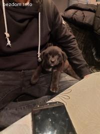 Подарявам малко кутре