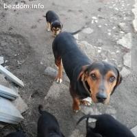 Подаряваме кученца