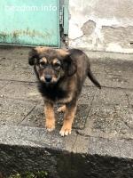 Подарява кученце