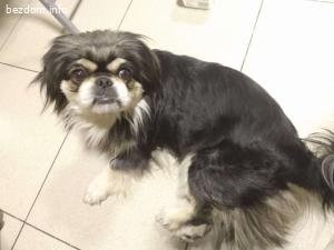 Намерено куче в град Русе, район Халите.