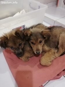 Две малки братчета търсят дом