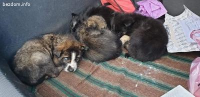 Изоставени кученца търсят стопани!