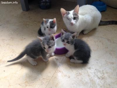 Изгубена женска котка в района на Киноцентъра