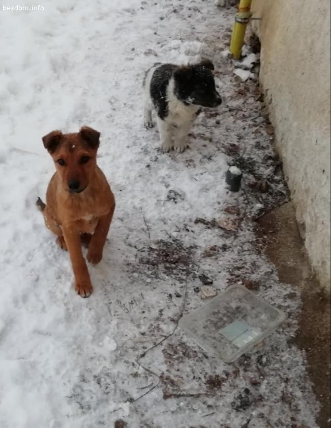 Две кученца търсят дом