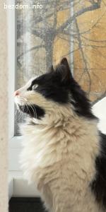 Маца търси дом