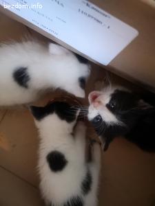 Подарява три котета