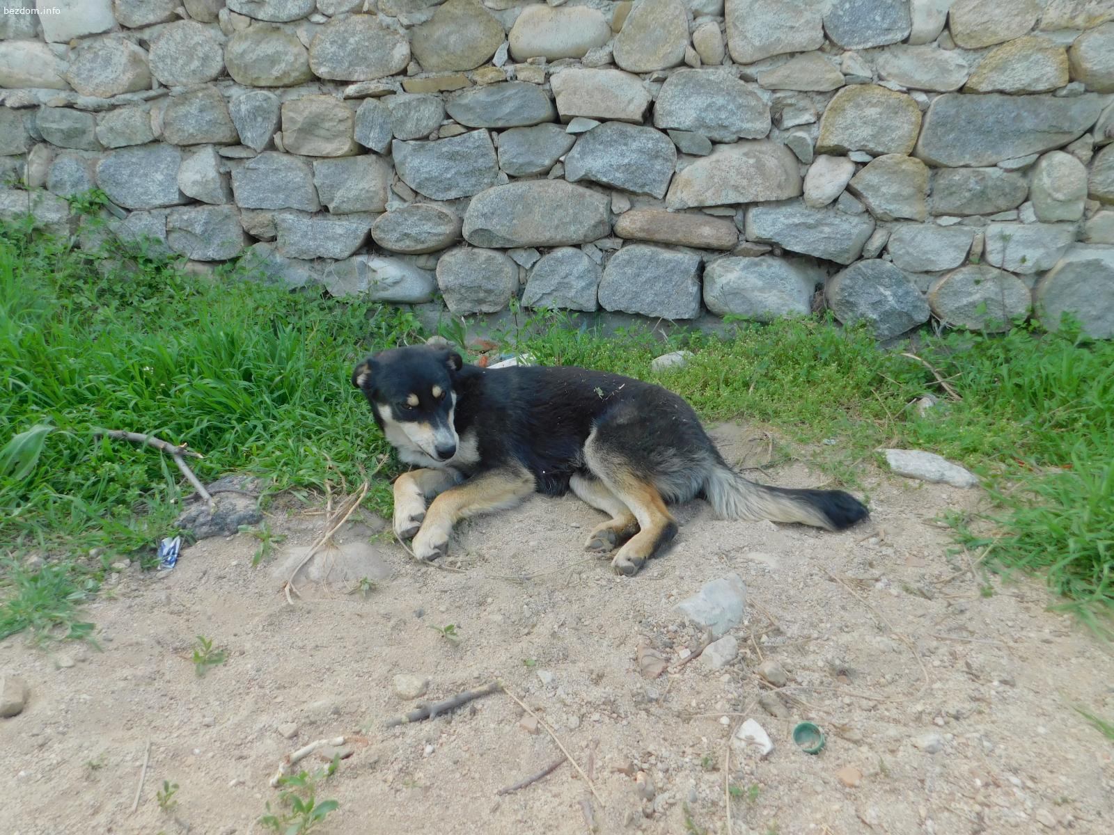 Куче търси дом