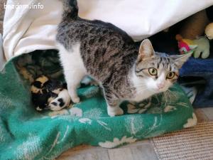 търся дом на моите осиротели котета