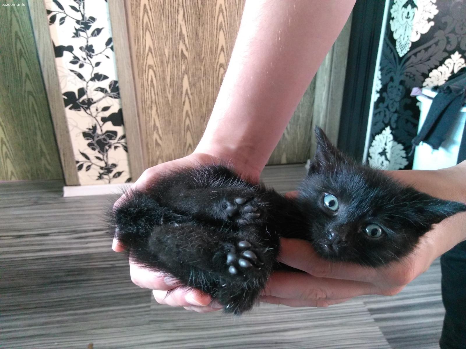 Черно котенце си търси дом