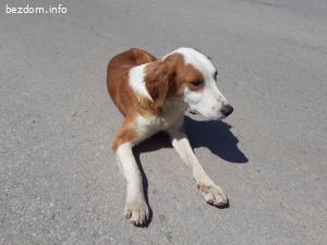 Търси се постоянен дом за женско куче