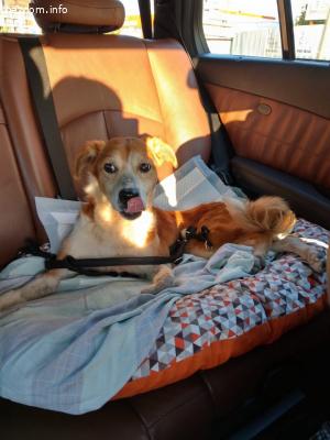 Спешно дом за кученце