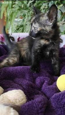 Женско коте Фъдж/Фют търси дом