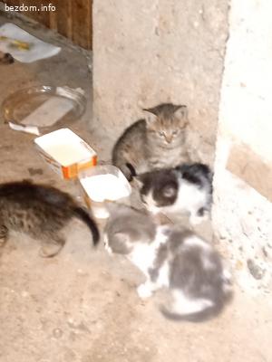 Търси се дом за четири малки котета