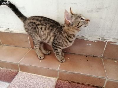 Малък тигър търси дом