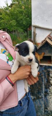 За осиновяване/подаряване кученца!
