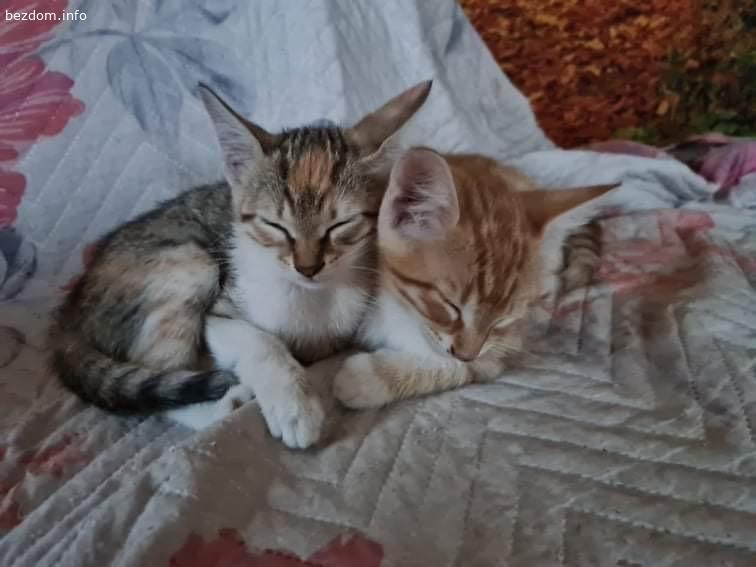 Малки котенца си търсят нов дом