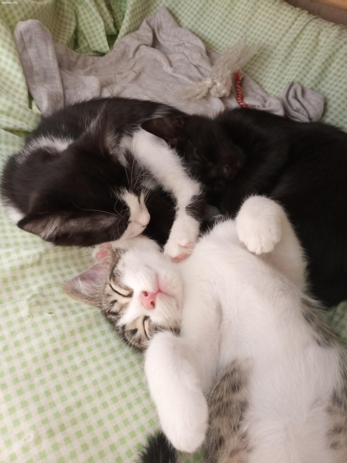 Кити, Нера и Снупи - в очакване на приключения и уютен дом