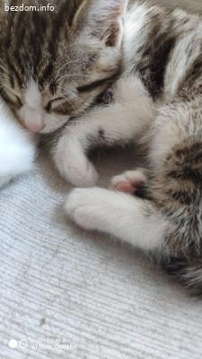 Подаряваме четири малки котета