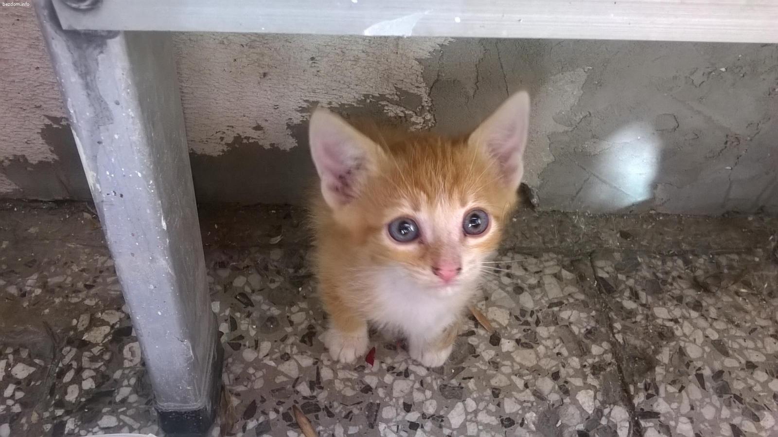 Коте за осиновяване