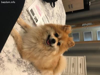 Изгубено/откраднато куче