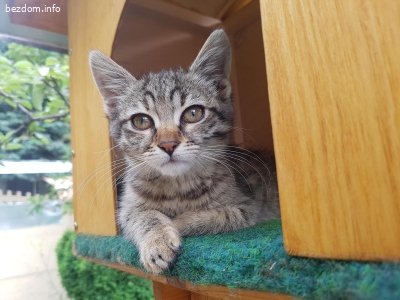 Подарявам женско коте - София