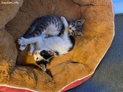 Подарявам две малки котенца
