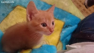 Подаряват се котета - мотета