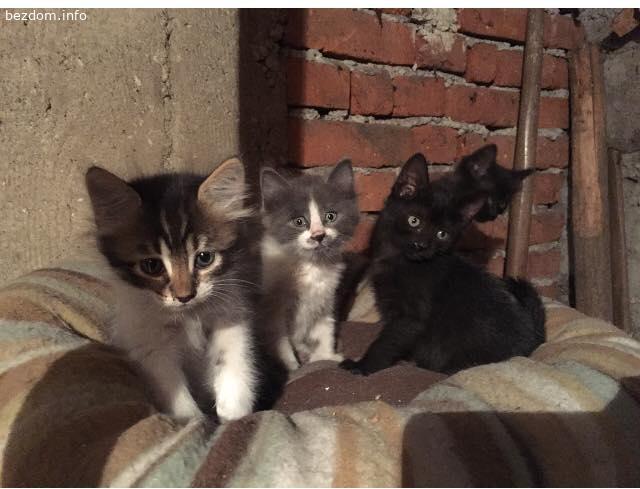 СОФИЯ - Семейство котенца търсят дом и любящи стопани!