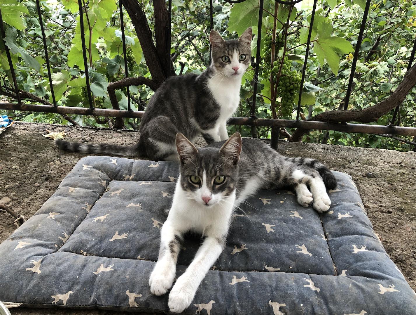 Красиви котета си търсят дом