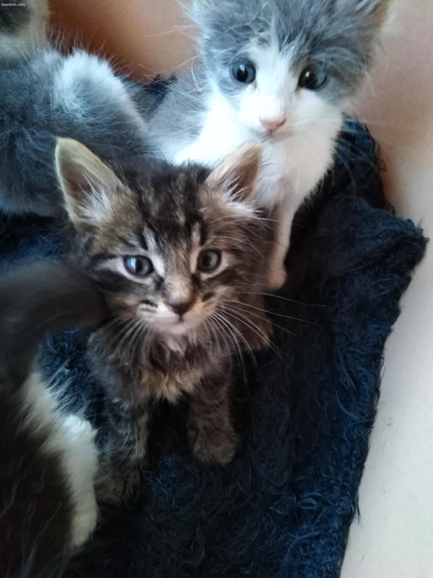 Малки пухкави котенца