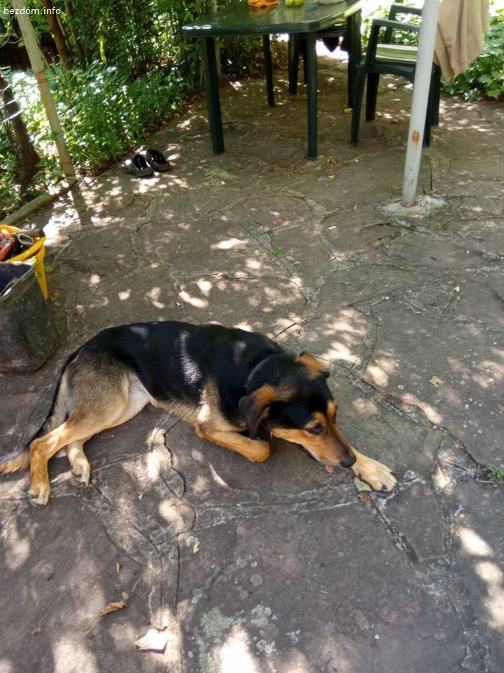 Намерено куче