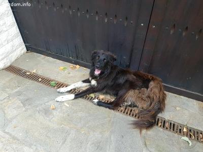 Намерено бездомно куче, нека му намерим дом
