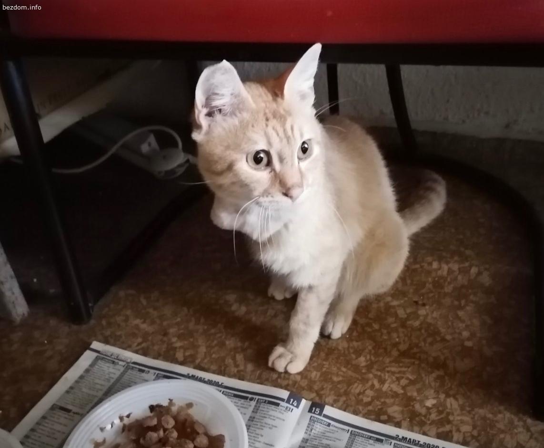Търси се дом за малко мъжко коте!