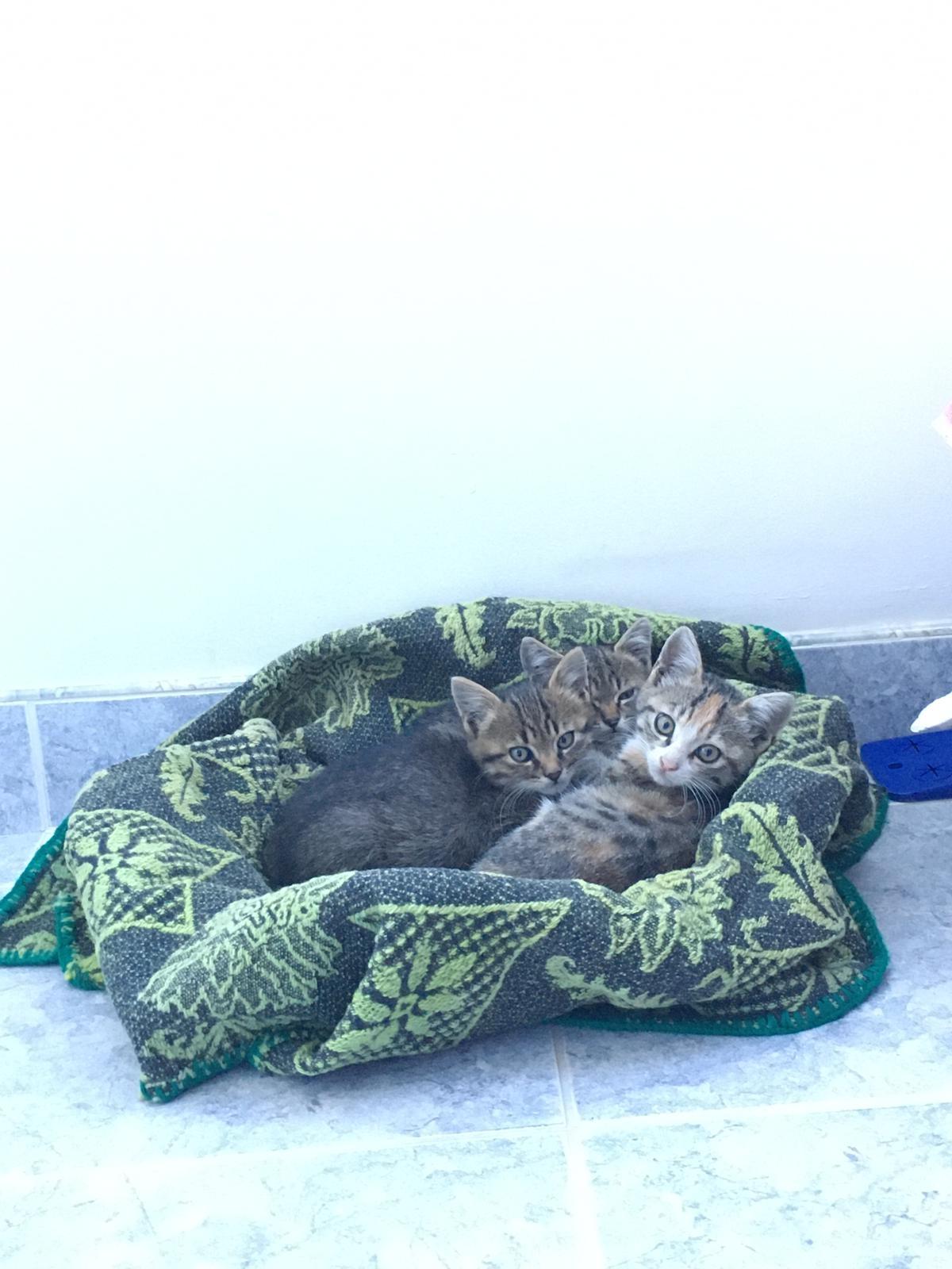 Три малки котета си търсят дом