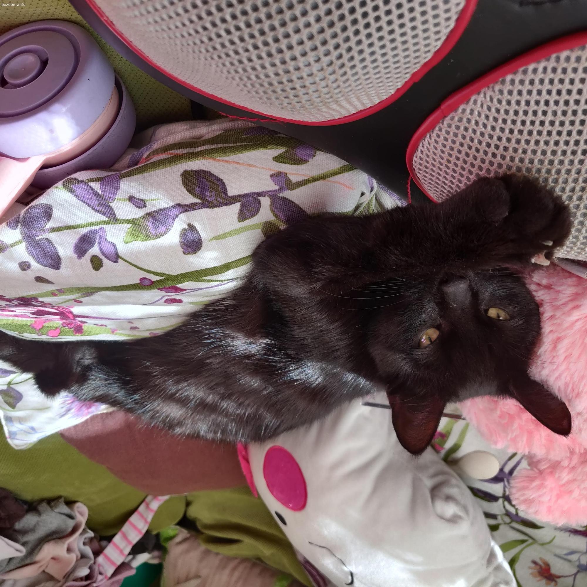 Коте си търси дом