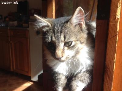 Подарявам домашни четиримесечни котета