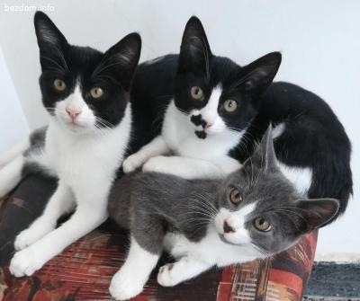 Четири котенца