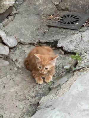 Подарявам котенца
