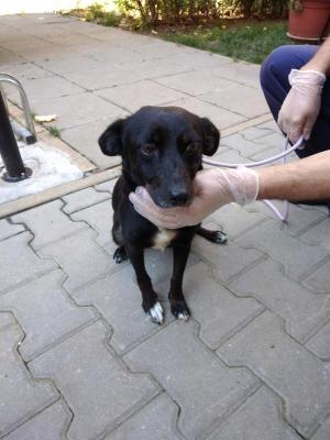 Мина – най-кроткото и обичливо куче, спешно търси дом